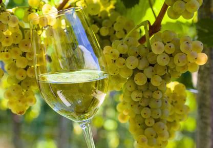 Welche Trinktemperatur für Weißwein?