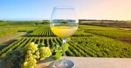 Welche Gerichte passen zu Weißwein?