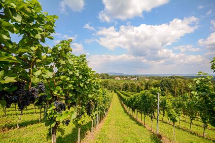 Welche Weißweine sind trocken Tipps
