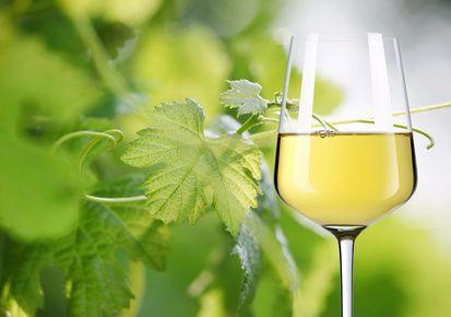 Welcher Wein passt zu Fisch?
